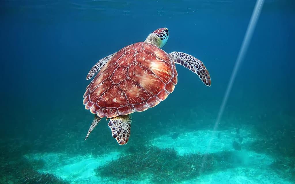 belize-viaggio-personalizzato-diving