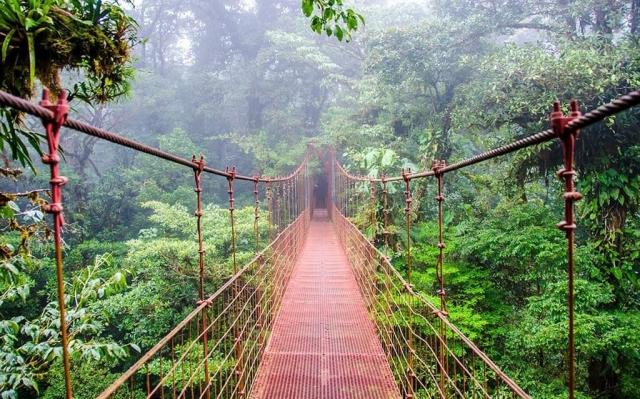 costa-rica-foresta-viaggio-su-misura