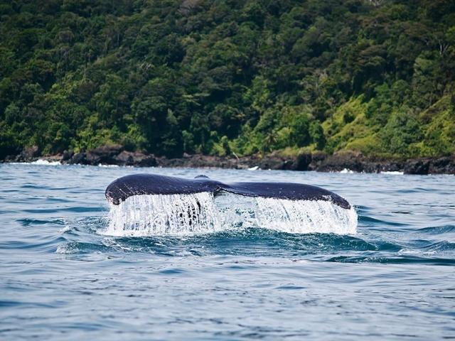 viaggio-colombia-balene