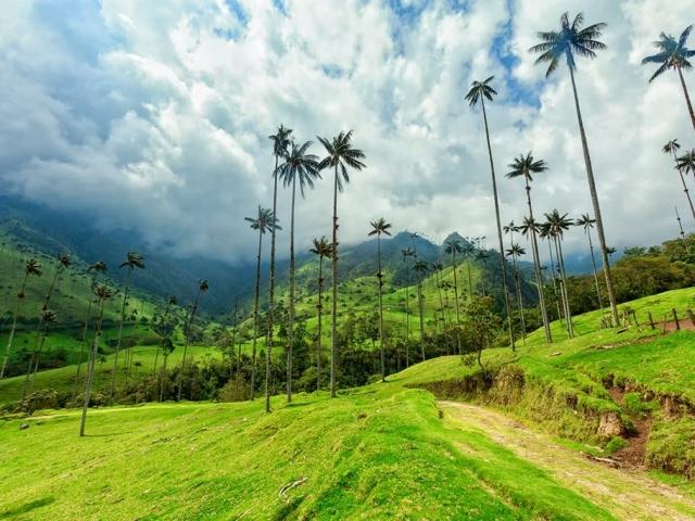 viaggio-personalizzato-tour-natura-colombia